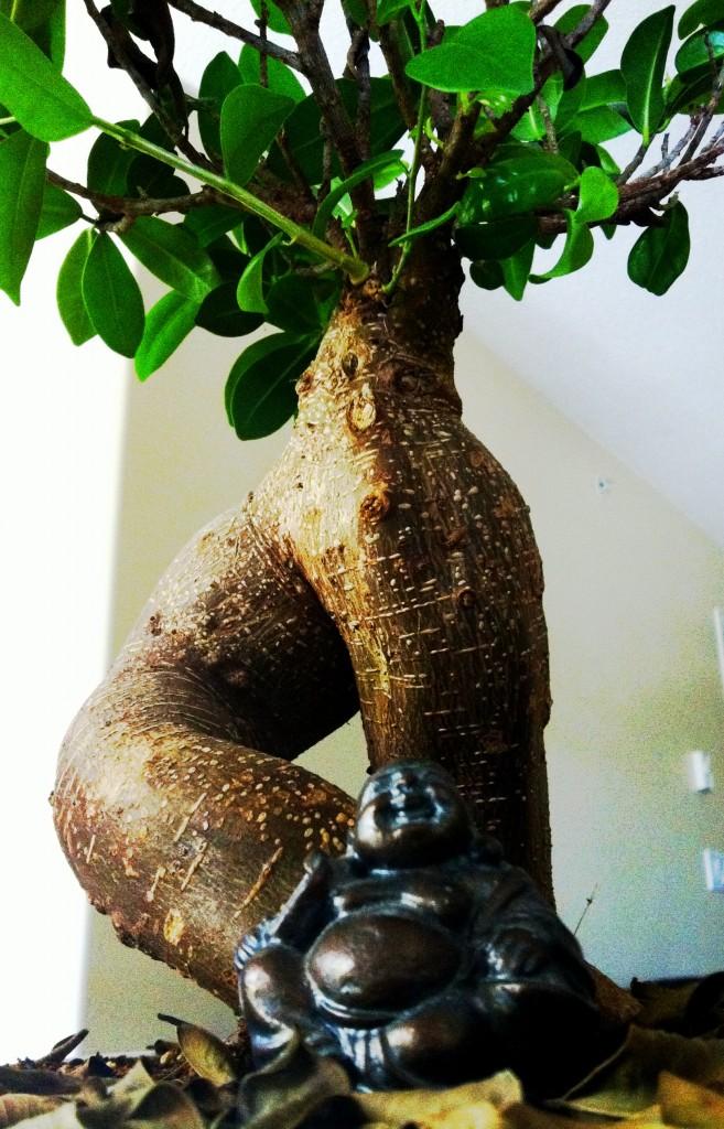 DAMY Health Office Ginseng Tree