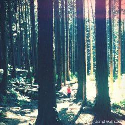 North Van Woods1